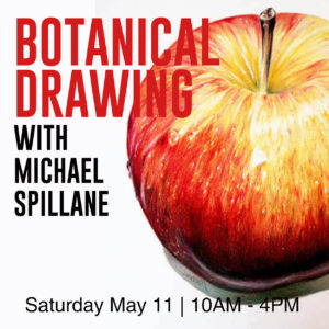 Botanical Drawing -- Apple in Coloured Pencil -- Elora Centre for the Arts