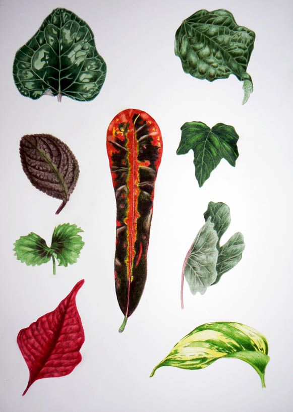 Watercolour Project -- Leaves By Gail Finlayson