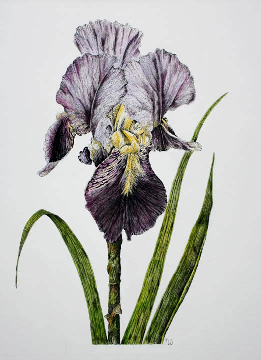 Floral Portraits in Pen & Ink with Watercolour -- Toronto Botanical Garden -- Completed