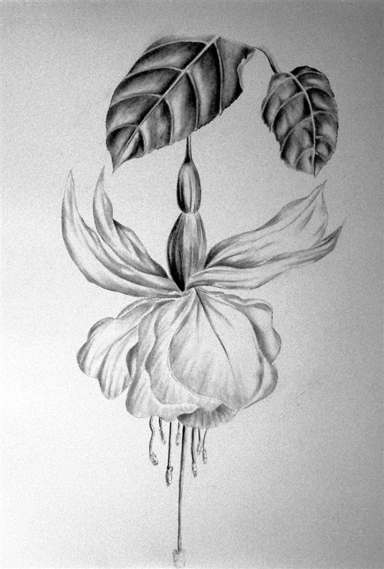 The Art of Botanical Drawing -- Aurora Cultural Centre
