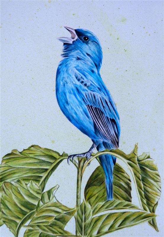 Indigo Bunting in Watercolour -- Project Package