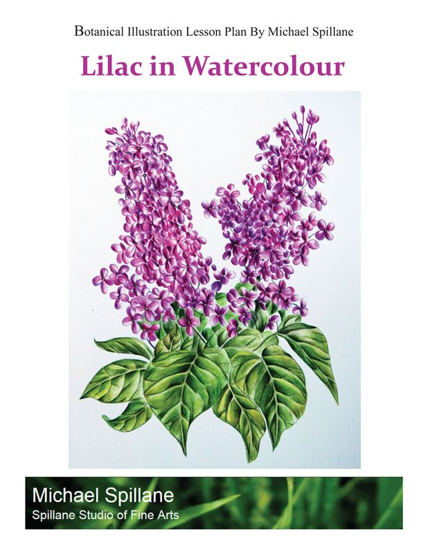 Lilacs in Watercolour -- Project Package