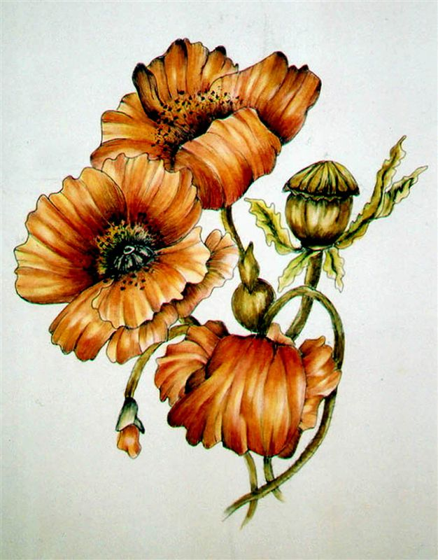 Floral Portraits in Pen & Ink with Watercolour -- Southampton Art School