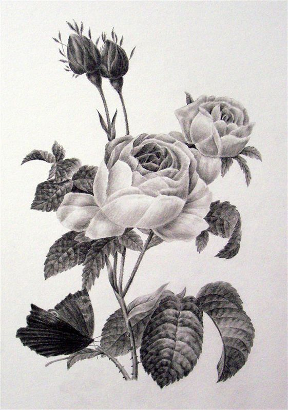 The Fundamentals of Botanical Drawing -- Victoria Park Art Gallery, Kincardine
