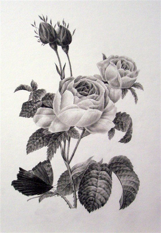 The Fundamentals of Botanical Drawing -- Southampton Art School
