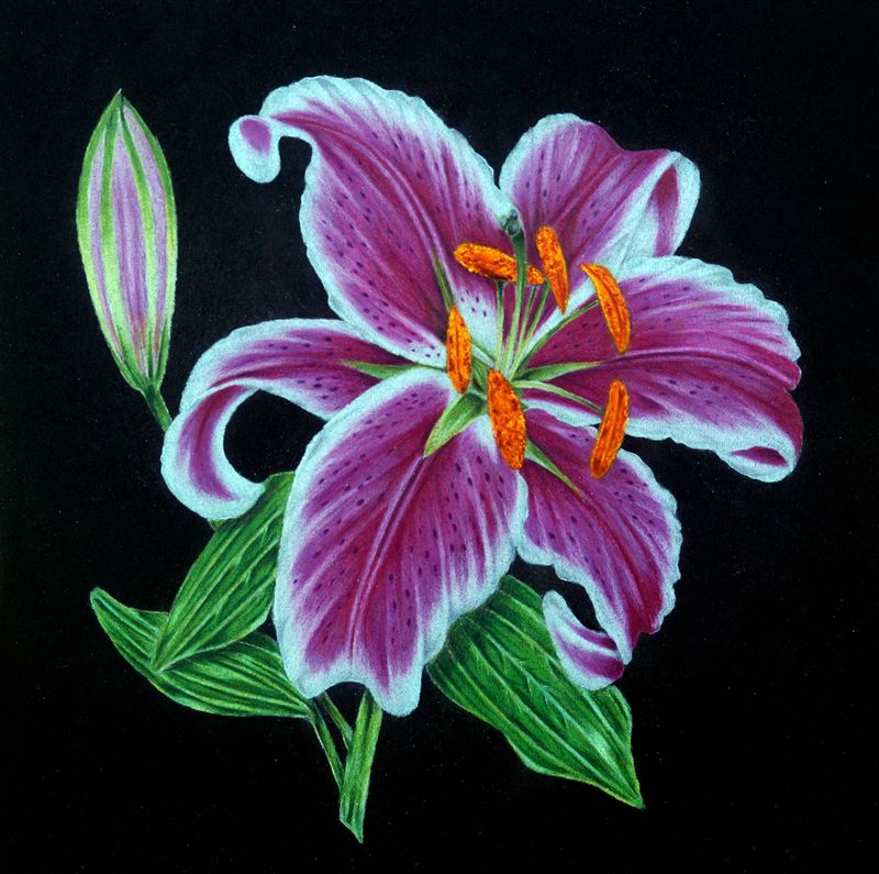 Florals on a Black Background in Coloured Pencils & Acrylic -- Maggiolly Art -- Orangeville