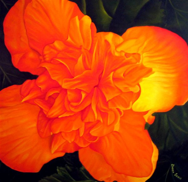 Begonia By Donna Saul