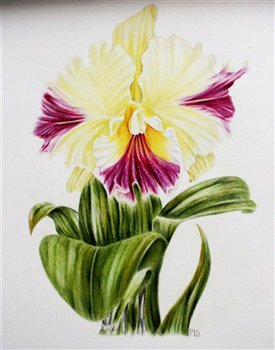 March 18, 19 & 26 2017  -- The Fundamentals of Botanical Drawing