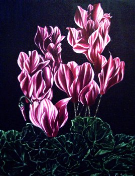 Cyclamen -- Oil on linen -- 20 x 16 inches