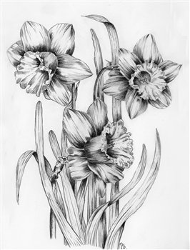 September 23 & 25, 2020 --The Fundamentals of Botanical Drawing -- Maggiolly Art -- Orangeville