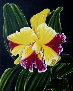 Cattleia Orchid -- Oil on wood panel -- 20 x 16 inches