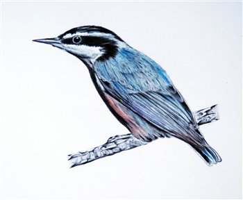 May 22, 23 & 24, 2020  -- Ontario Birds in Graphite and Watercolour -- Southampton Art School