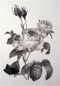 October 28 & 29 2017 -- The Art of Botanical Drawing