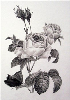 August 28 (Wednesday), 2019 --The Fundamentals of Botanical Drawing -- Victoria Park Art Gallery, Kincardine