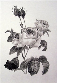 August 21, 22 & 23 2017  -- The Fundamentals of Botanical Drawing